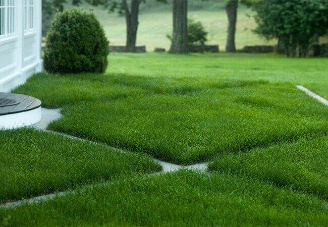 О технологии посева газона методом гидропосева на профессиональном оборудовании в Питере и области